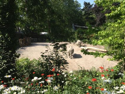 Zoo de Lille près de Ferme de Rosembois Gites et chambres d'hôtes à Fournes en Weppes près de Lille
